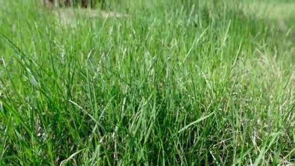 Třídění podle čerstvé krásná tráva dál vítr, přírodní