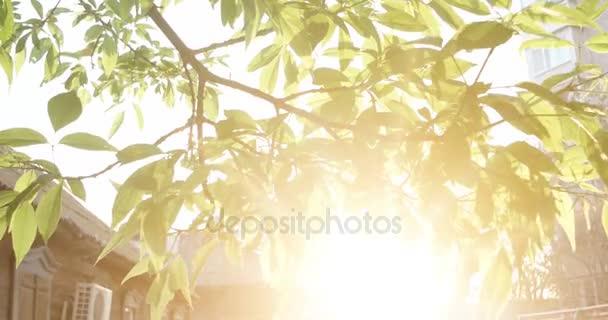 Krásný jarní pozadí s čerstvým elm listy a zářící slunce