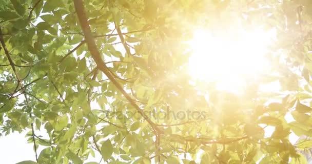 Sommer im Wald, abstrakte Naturhintergründe mit frischem Laub und Sonne im Hintergrund