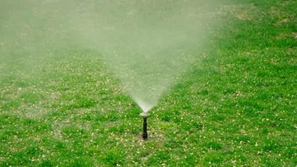 Yard trávou postřikovače. Zahradní travní zavlažování. Springer vody v trávníku s pes skvrny.