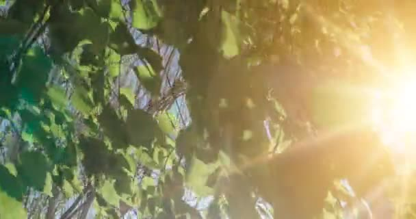 Forest tree leaves. Nature green wood sunlight footage. Hello summer concept