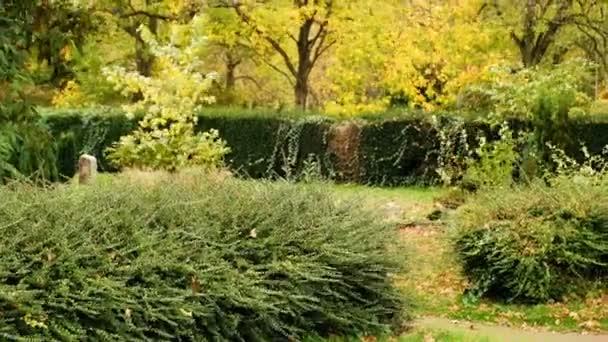 Podzimní krajina. Podzimní park alej stromů a žluté barevné listí