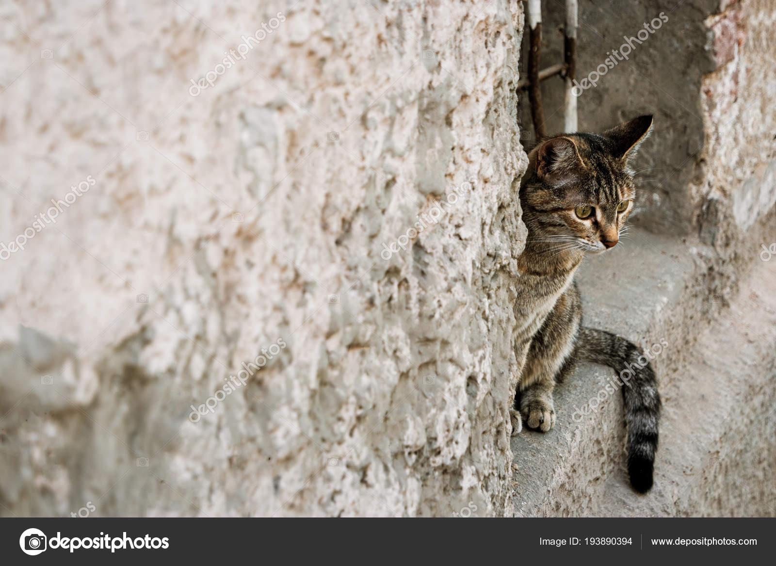 Calico cat peeking out of a window opening — Stock Photo