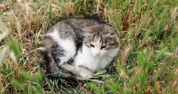roztomilá kočka v trávě