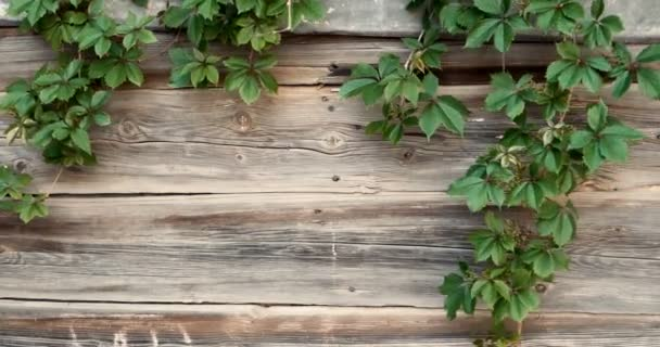 Starý dřevěný plot s hroznovými větvemi pohybujícími se ve větru, rám pro text, kopírovací prostor