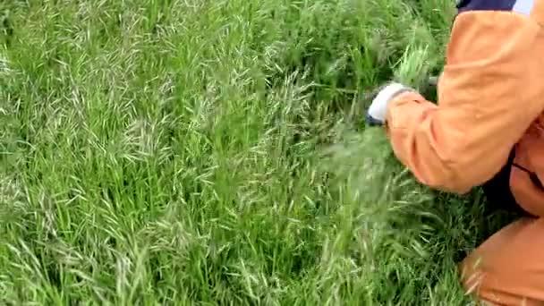 Ein Arbeiter mäht das Grün mit einem Halbmond oder einer Sichel