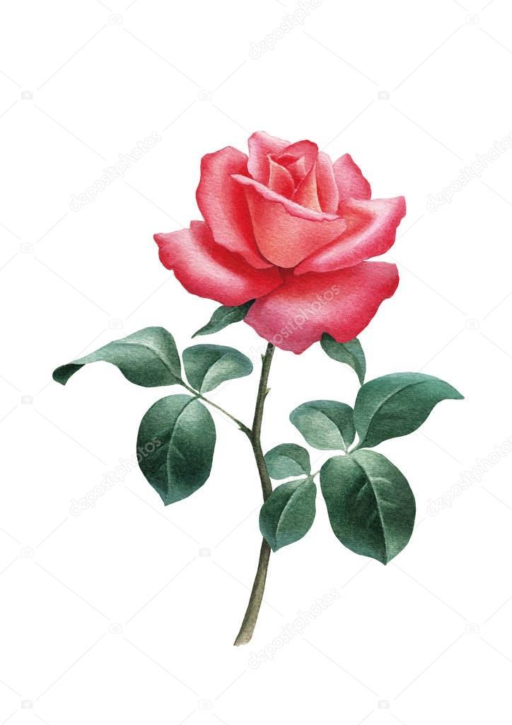 Berühmt Farbseiten Blumen Fotos - Druckbare Malvorlagen - amaichi.info