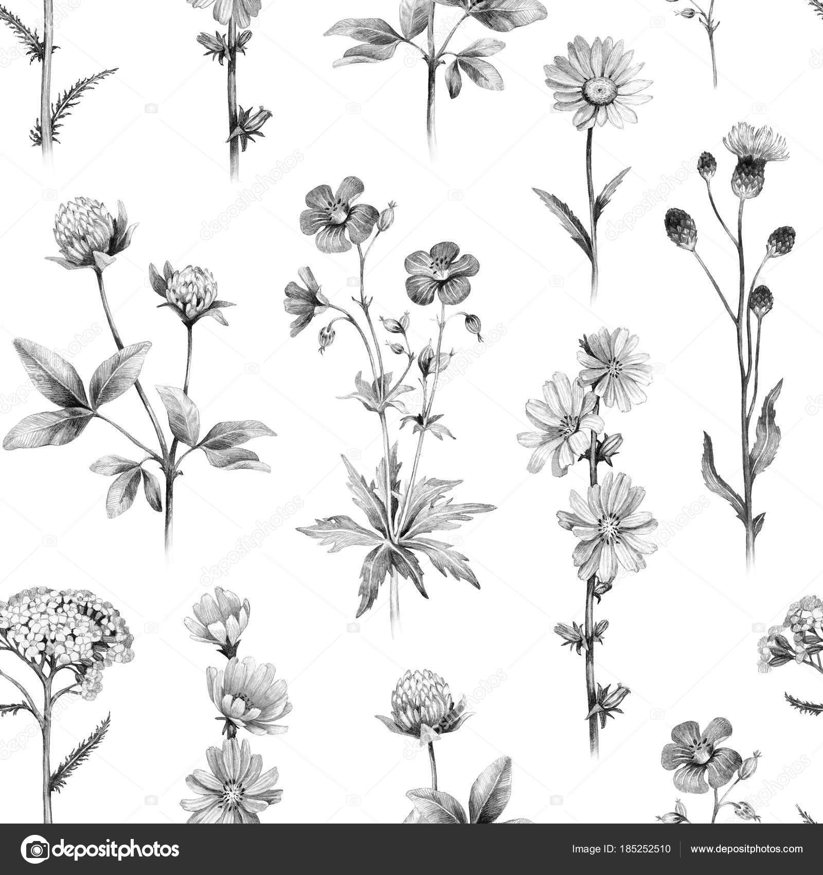 Bleistiftzeichnungen Von Wilden Blumen Nahtlose Muster