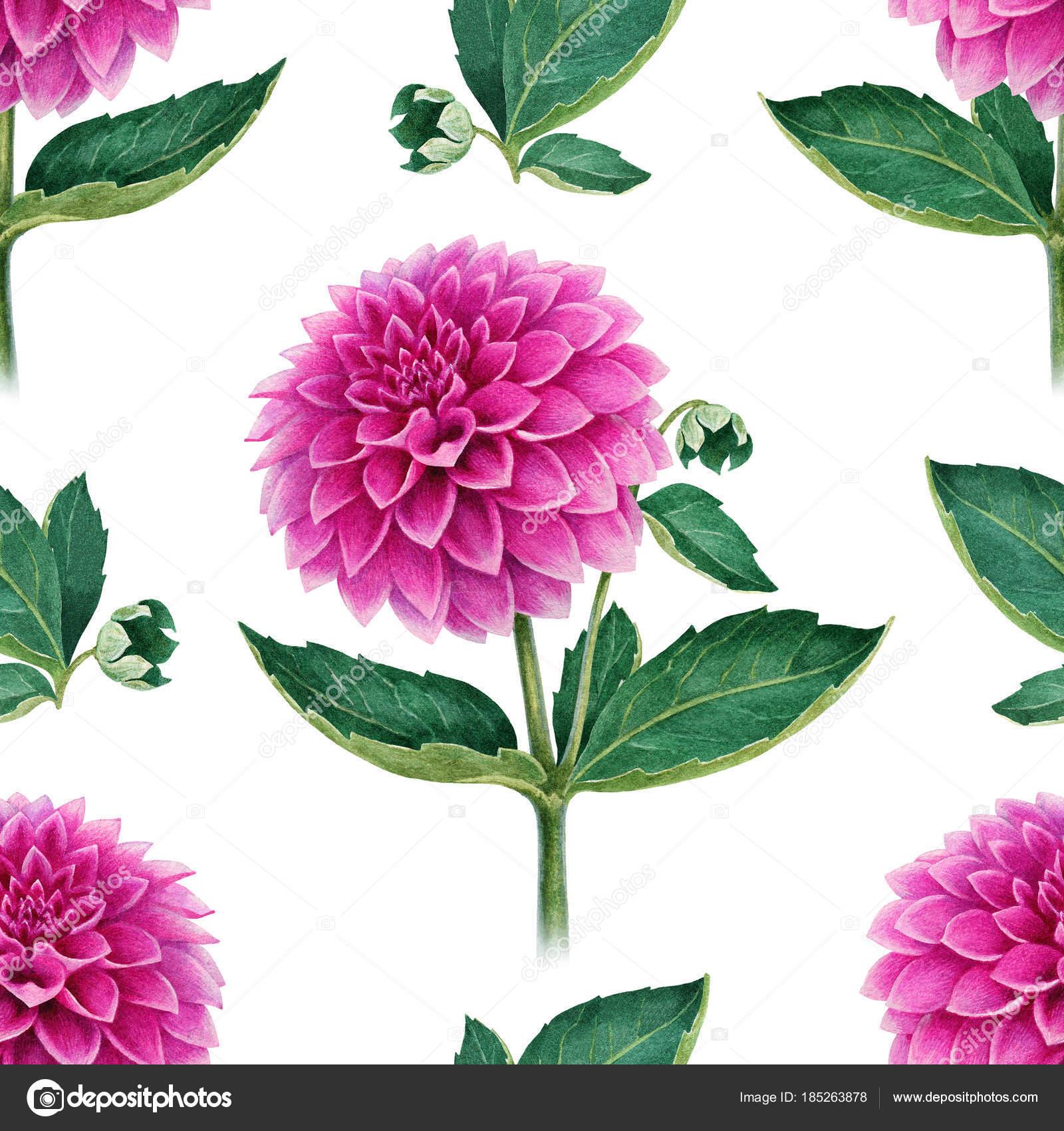 Watercolor illustration of dahlia flowers seamless pattern stock watercolor illustration of dahlia flowers seamless pattern stock photo izmirmasajfo