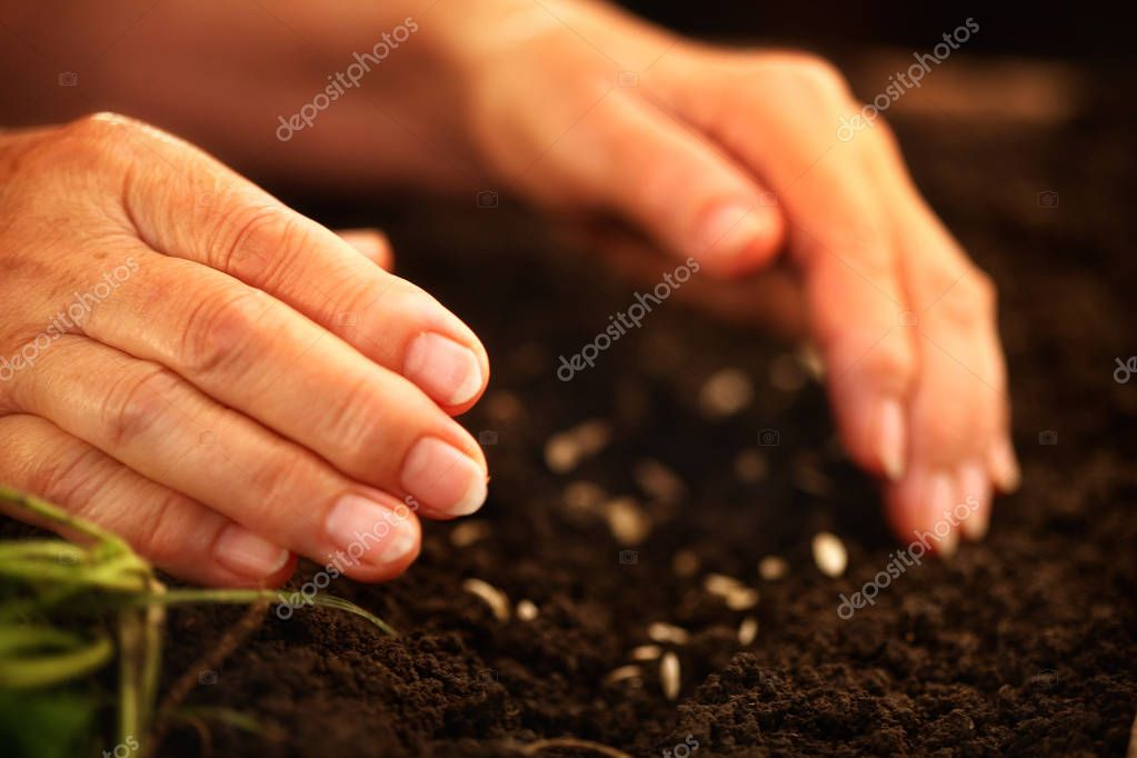 Hand of elderly woman throwing seeds in dirt.