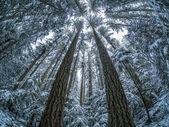Rybí oko zimní les