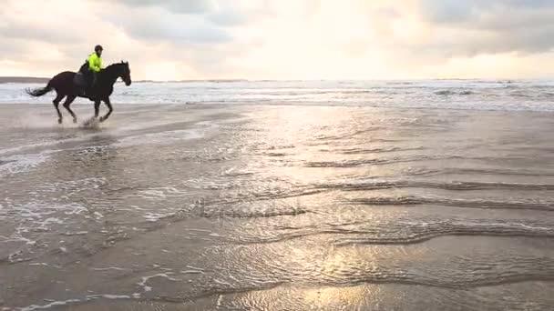 Koně tryskem na pláži při západu slunce, pomalý pohyb