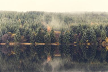 Autumn scene, mist over the trees next to the lake