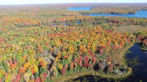 Wald Und See Im Herbst Aerial View Kanada Stockvideo C William87