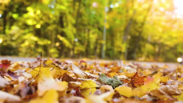 Car passing and making autumn leaves fly, slow motion