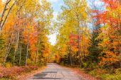 Cesta lesem s podzimní barevné listí v Kanadě