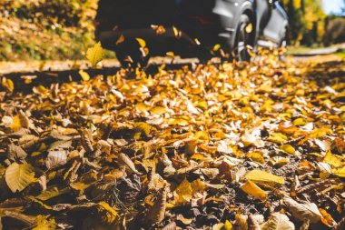 Car passing and making autumn leaves fly