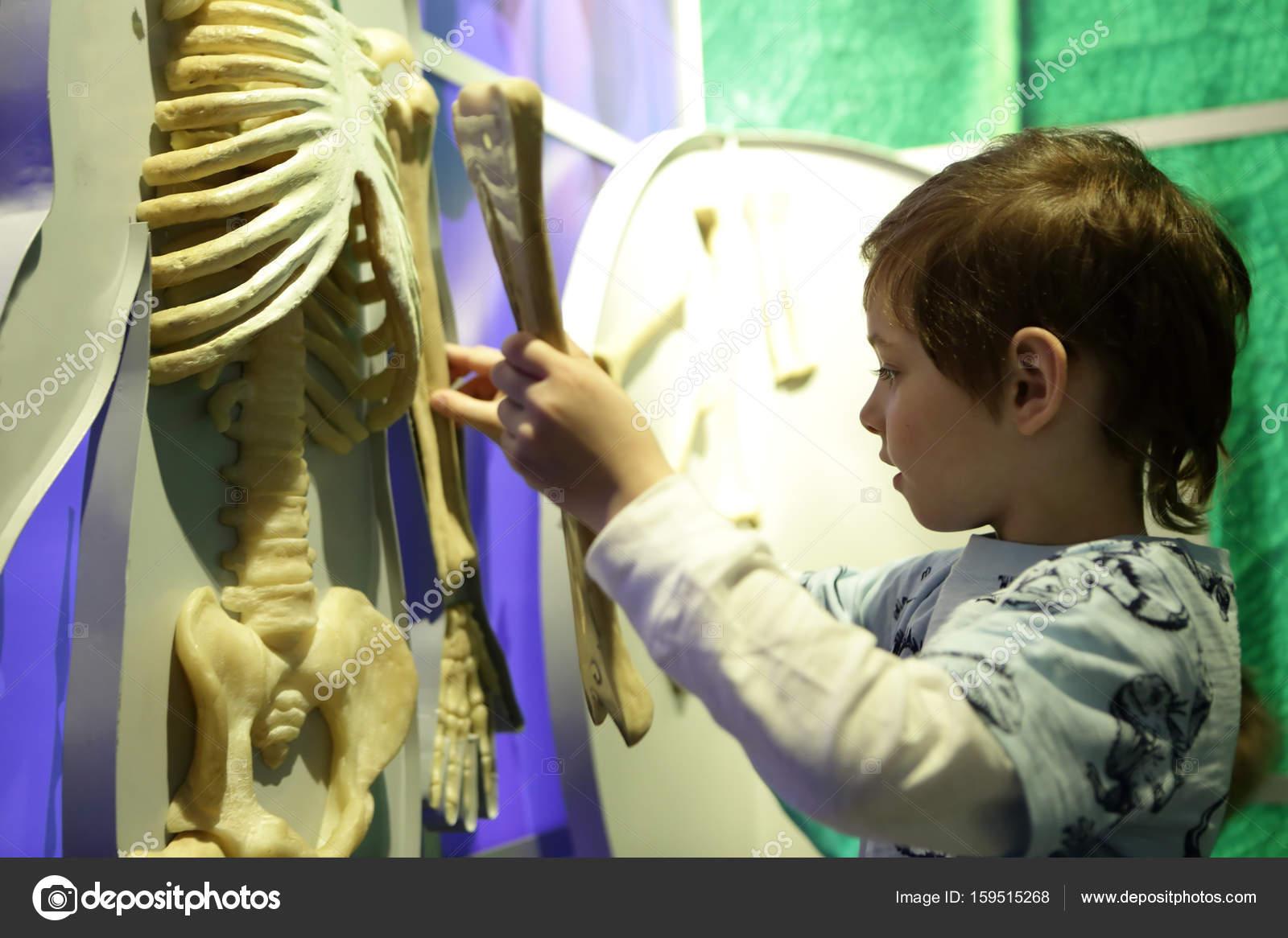 Boy studying human anatomy — Stock Photo © AChubykin #159515268