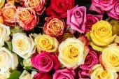 Gyönyörű színes rózsák