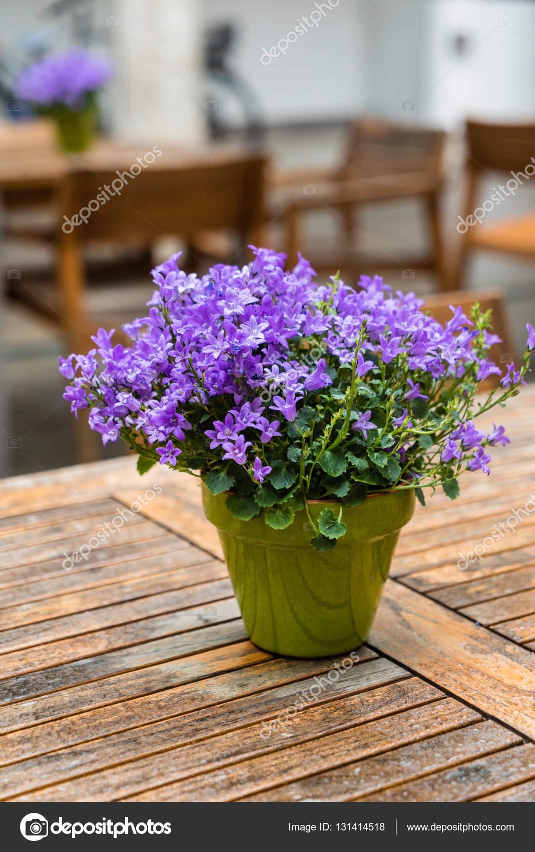 Purple Bell Flowers Stock Photo Shebeko 131414518