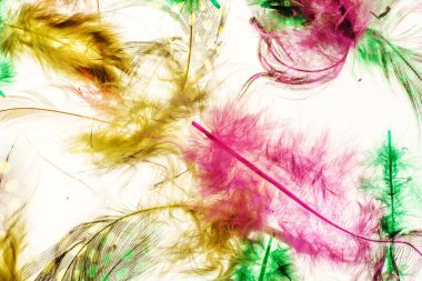 color tender feathers