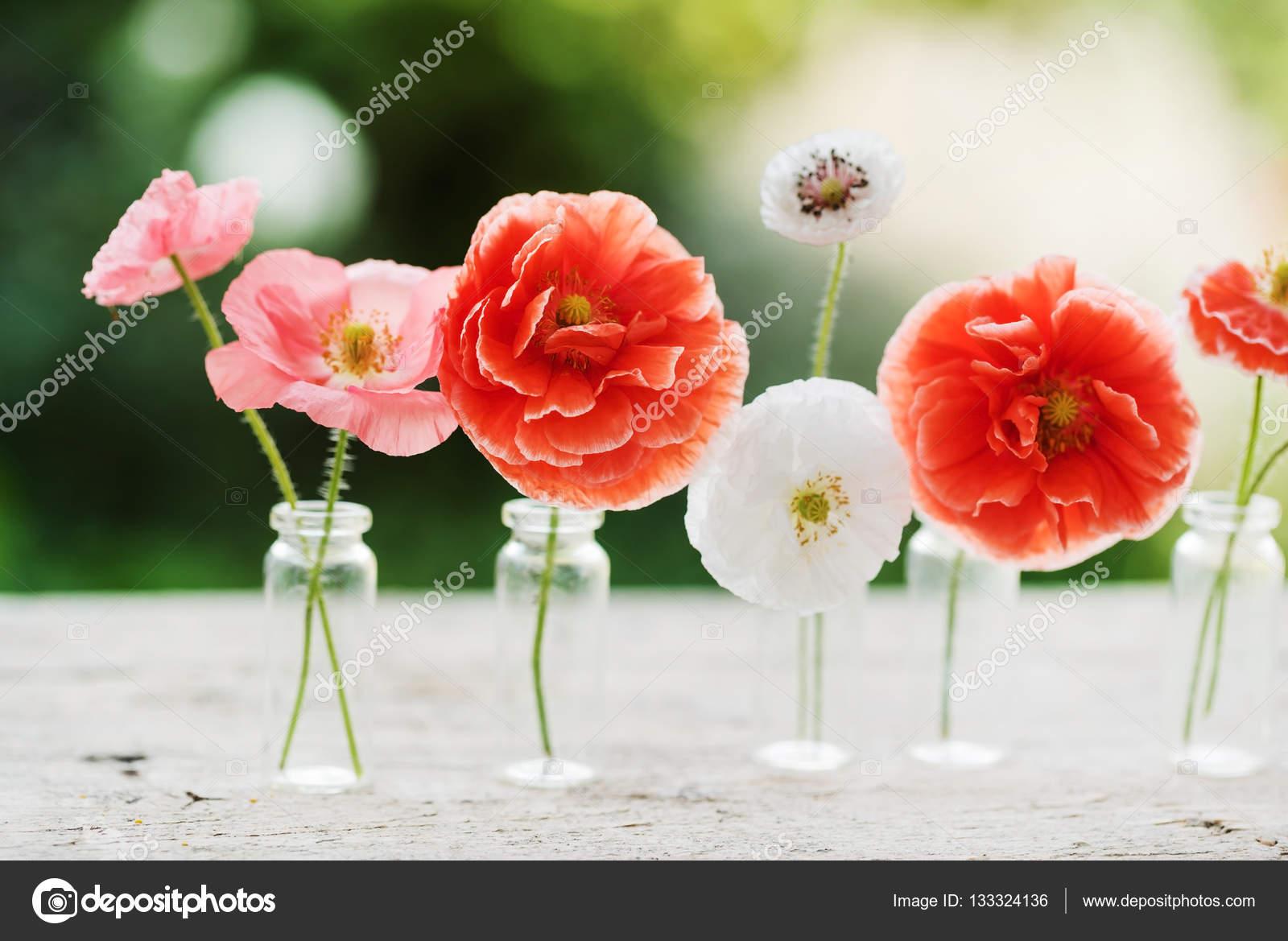 Beautiful Poppy Flowers Stock Photo Shebeko 133324136