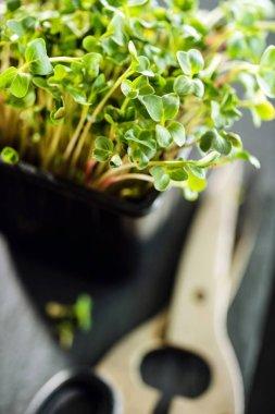 fresh micro greens