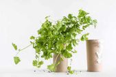 Toilet paper roll and seedling
