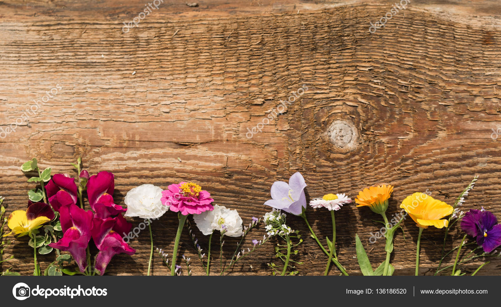 Beautiful Summer Flowers Stock Photo Shebeko 136186520