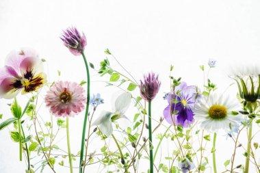 tender summer flowers