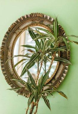 plant in vintage mirror