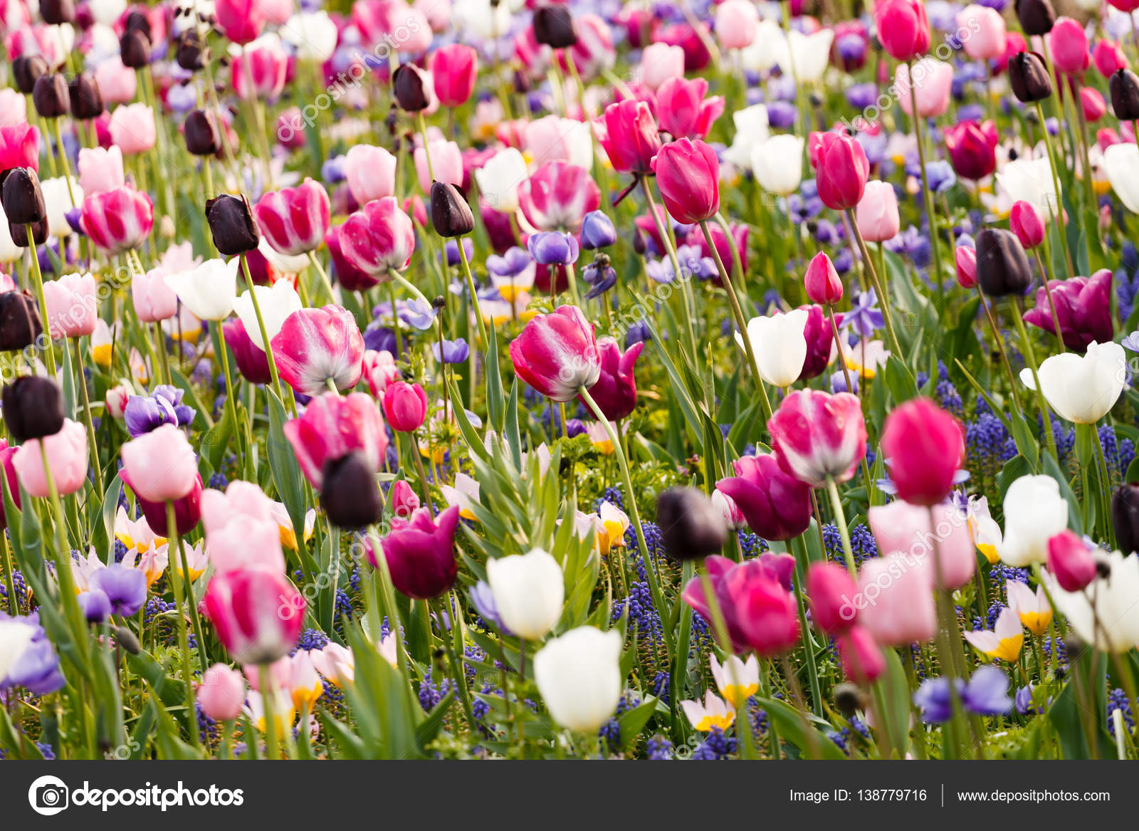Jardin Fleuri De Printemps Photographie Shebeko C 138779716