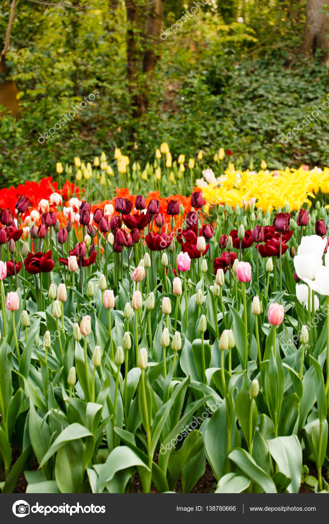 Jardin Fleuri De Printemps Photographie Shebeko C 138780666