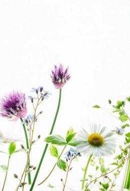 Fresh summer flowers