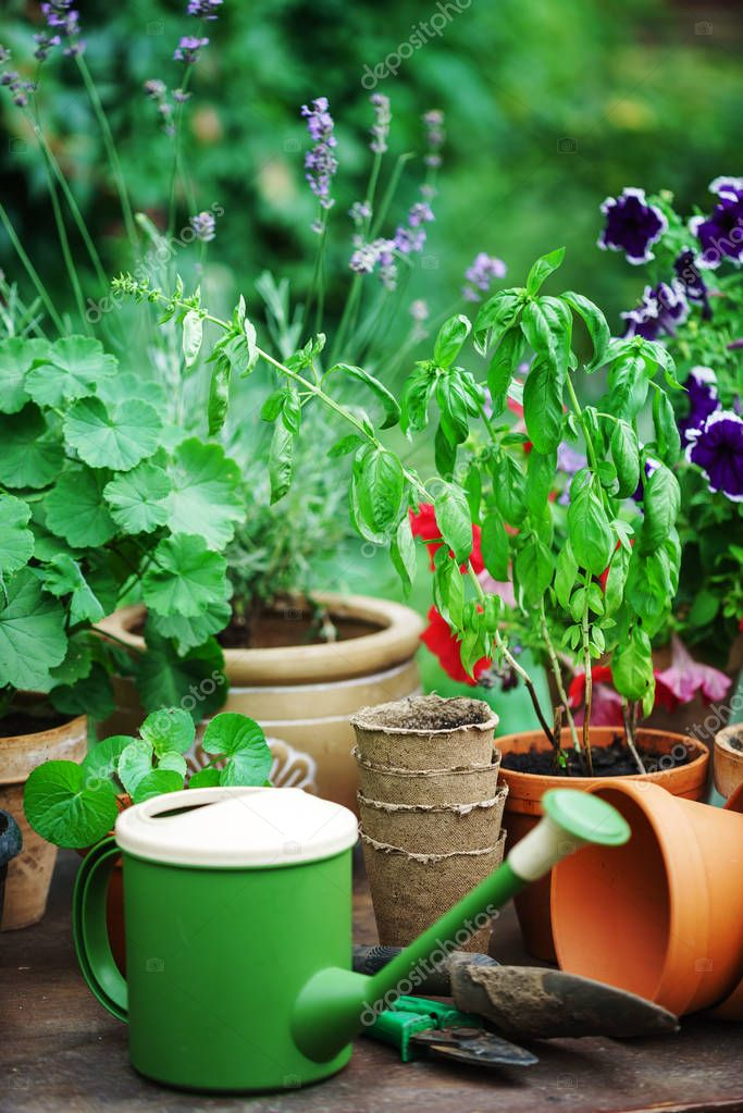plants in summer garden