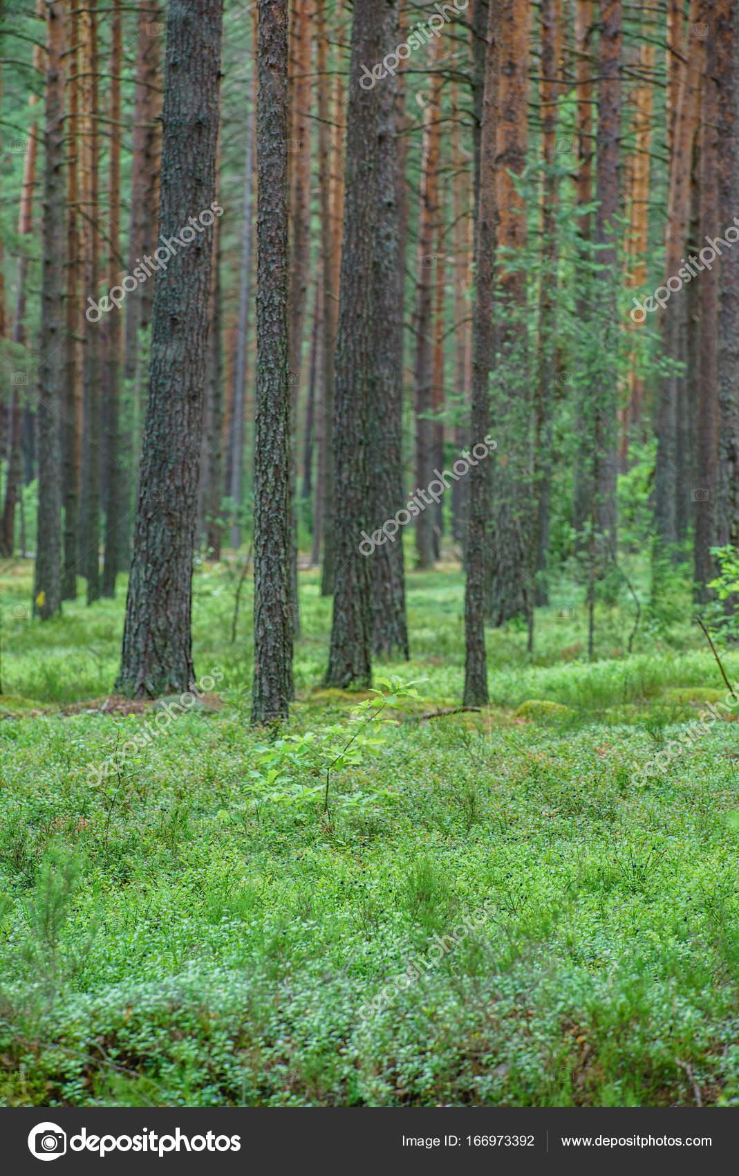 Imágenes Bosques De Noche Bonitos Bosque Bonito En Verano Foto