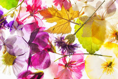colorful dry flowers on white background, isolated