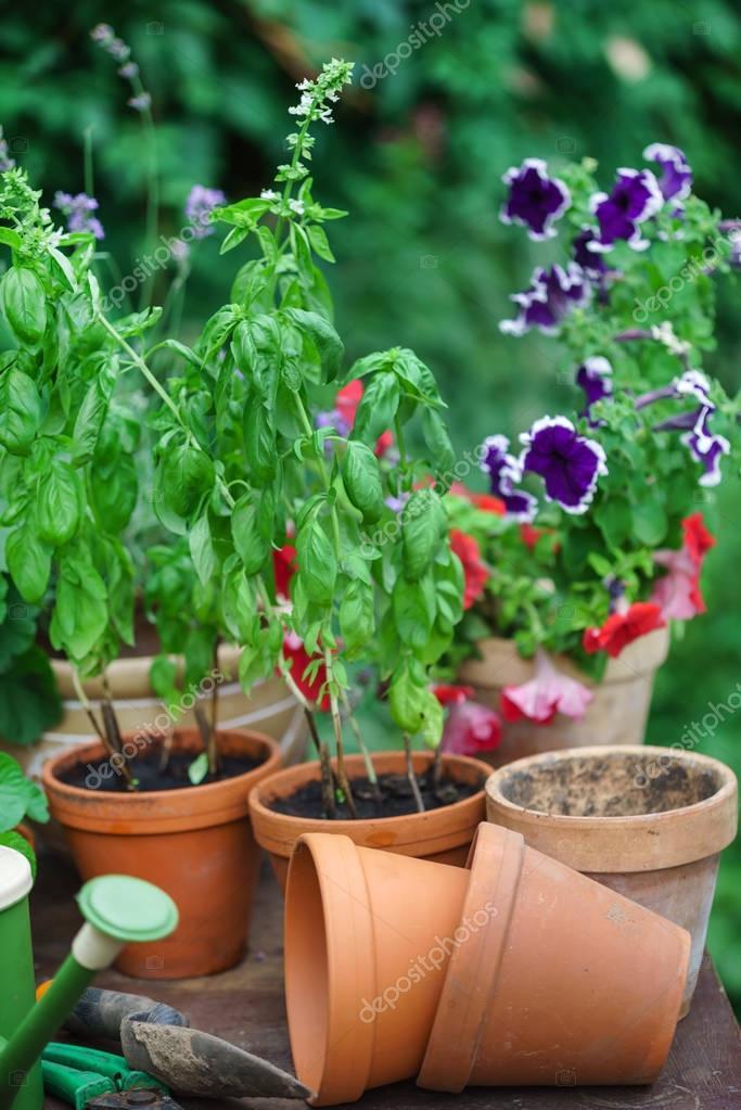 summer garden with plants in pots