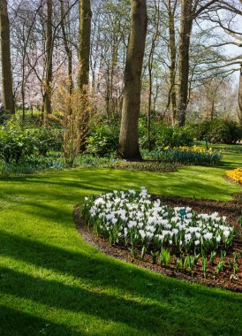 early spring garden with flowers. nature
