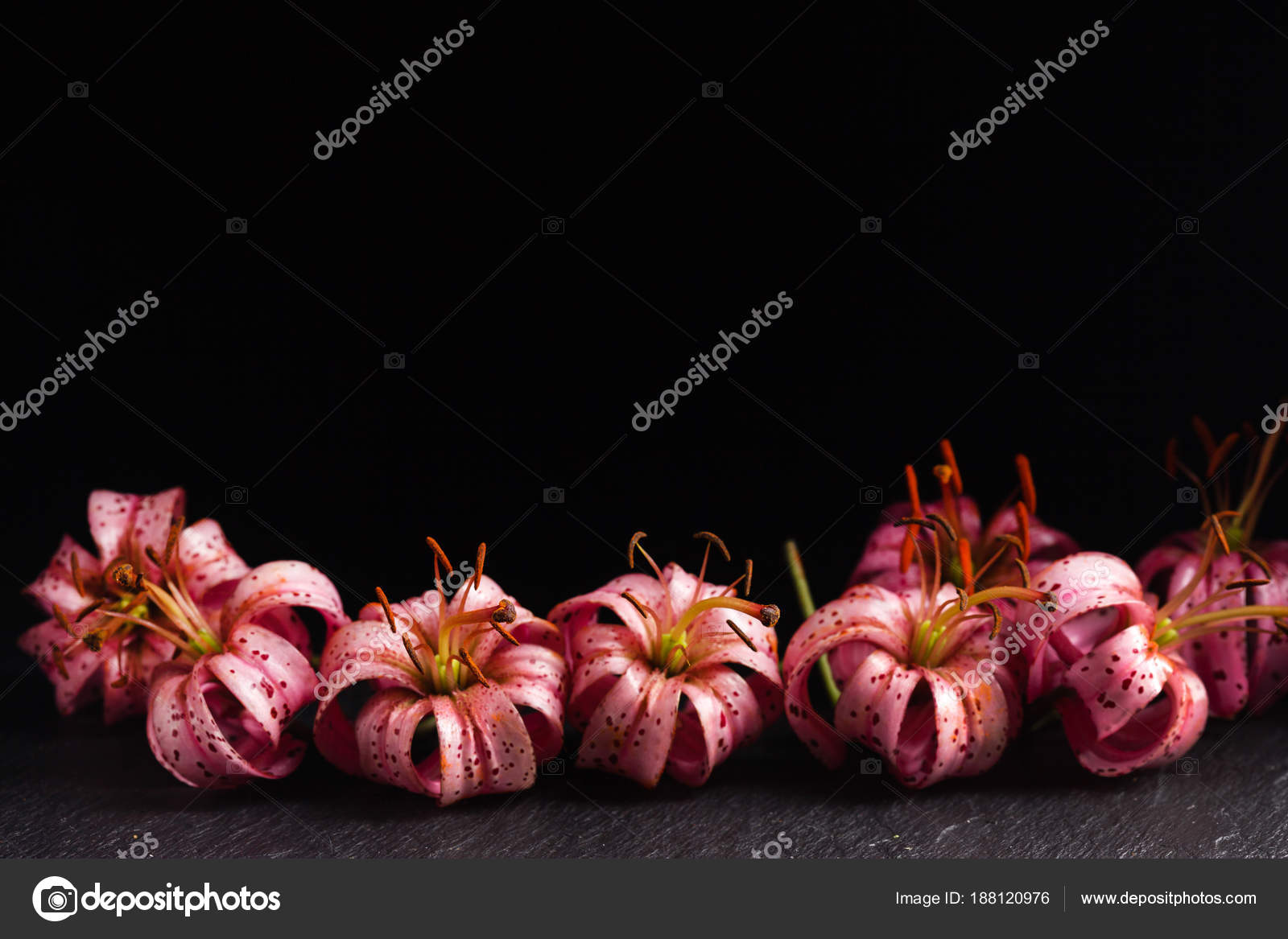 Lily flowers black background stock photo shebeko 188120976 lily flowers black background stock photo izmirmasajfo