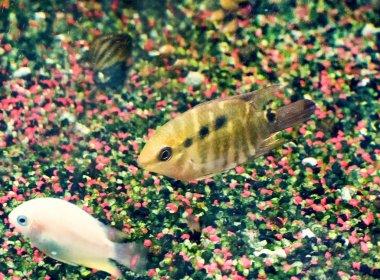 the aquarium fishes
