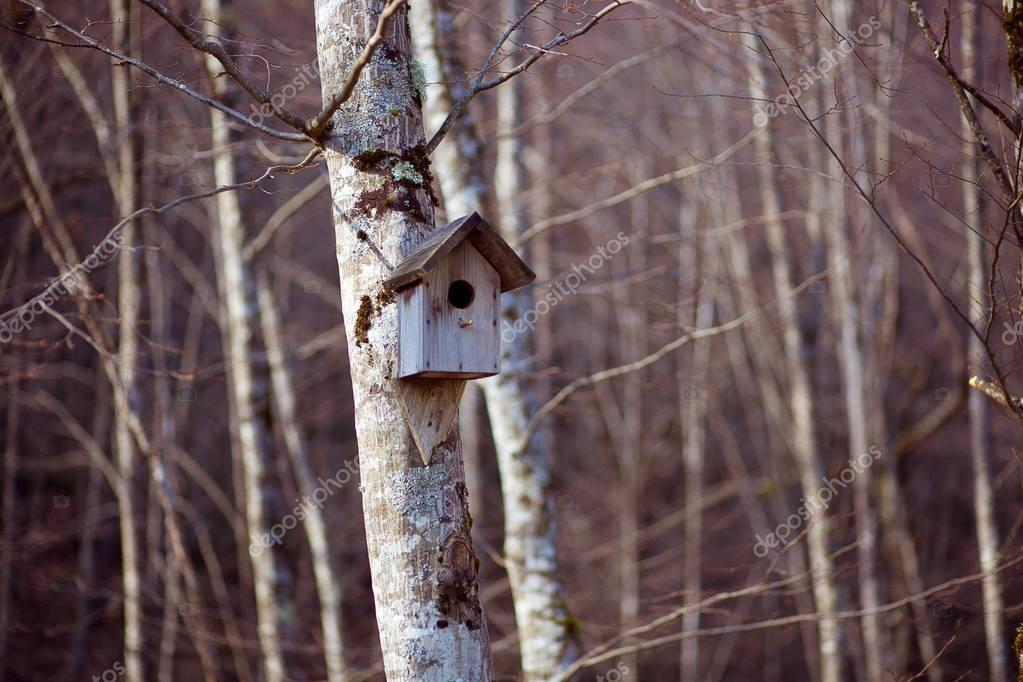 Birdhouse up in tree in forest.