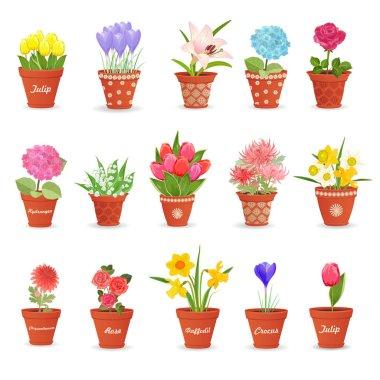 lovely flowers in pots