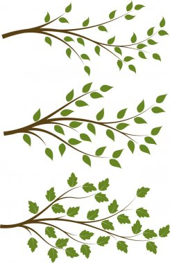 branches with green leaves