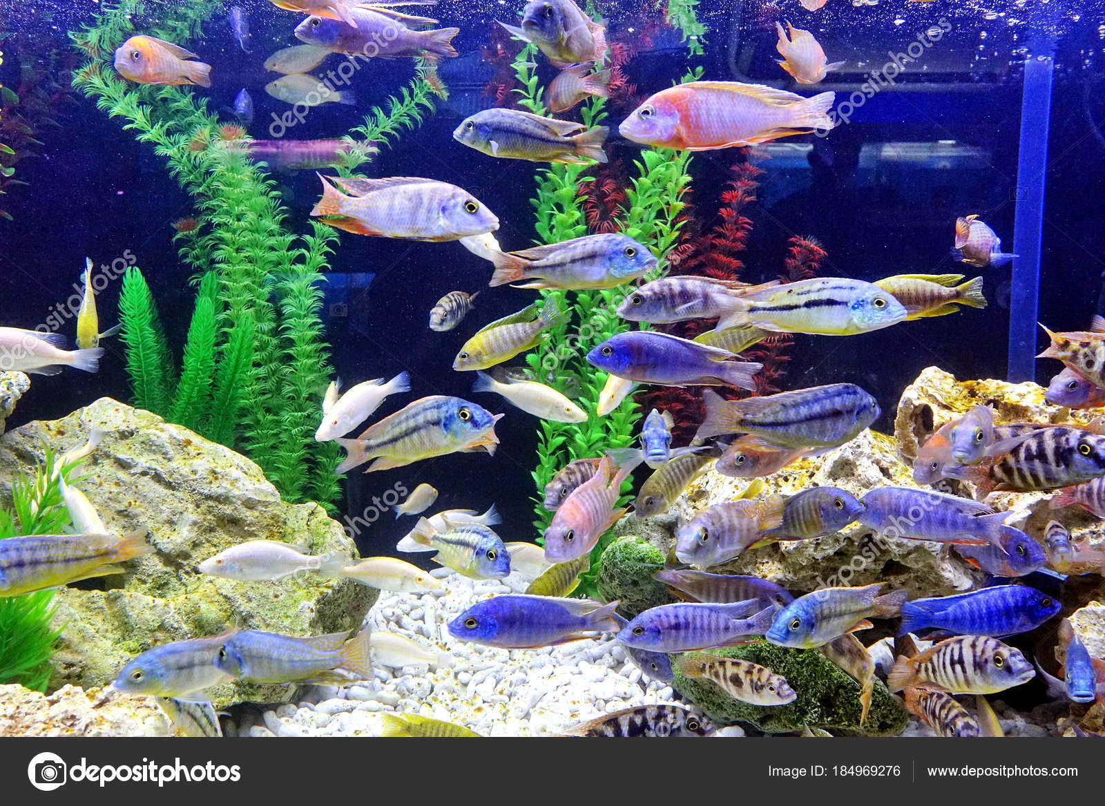 A Fish Tank with Colorful Tropical Fish — Stock Photo © shiyali ...