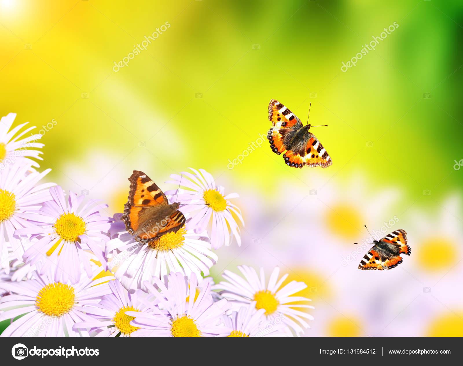 butterflies flying over flowers u2014 stock photo frenta 131684512