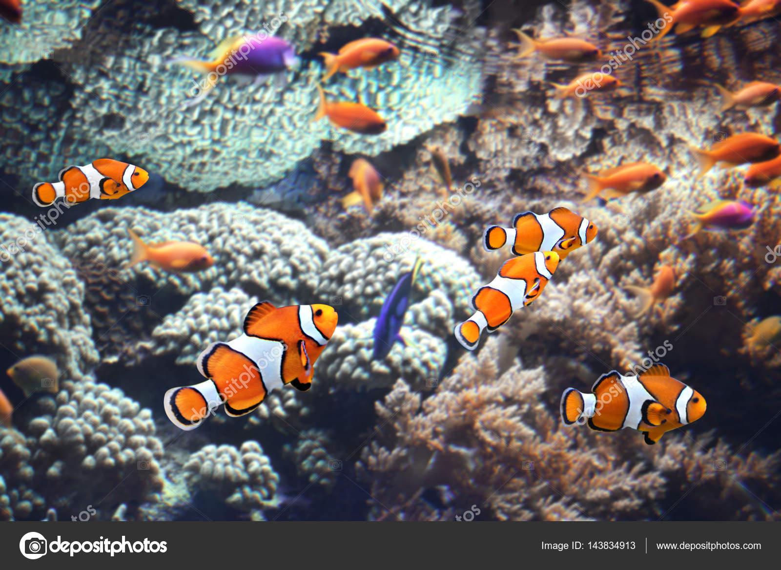 Coralli di mare e pesce pagliaccio foto stock frenta for Pesce pagliaccio foto