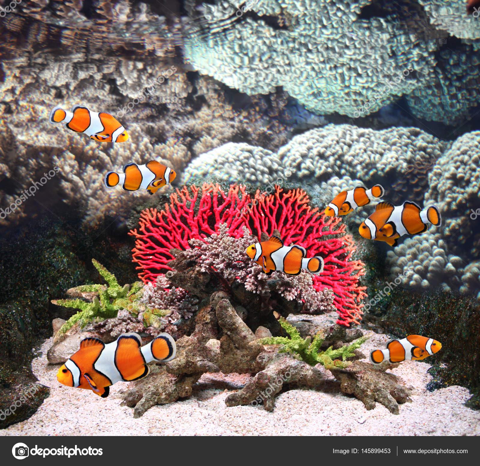Sea corals and clown fish — Stock Photo © frenta #145899453