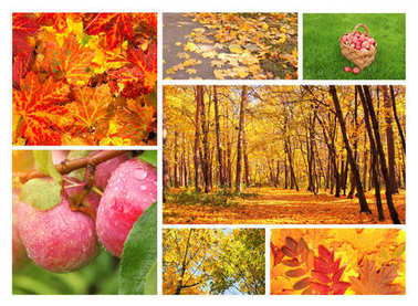 Collection of photos with autumn leaves, forest and apples stock vector