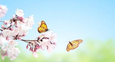 """Картина, постер, плакат, фотообои """"sakura flowers and two monarch butterflies on sunny sky background. beautiful nature spring horizontal banner. copy space for text"""", артикул 354600894"""